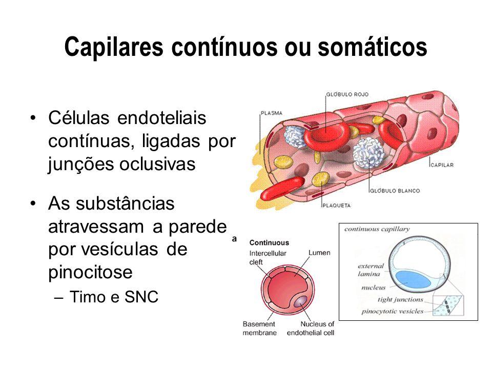 Capilares contínuos ou somáticos Células endoteliais contínuas, ligadas por junções oclusivas As substâncias atravessam a parede por vesículas de pino