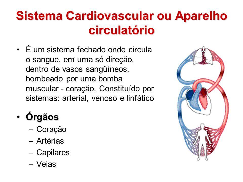 Sistema Cardiovascular ou Aparelho circulatório É um sistema fechado onde circula o sangue, em uma só direção, dentro de vasos sangüíneos, bombeado po