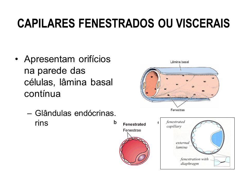 CAPILARES FENESTRADOS OU VISCERAIS Apresentam orifícios na parede das células, lâmina basal contínua –Glândulas endócrinas, rins