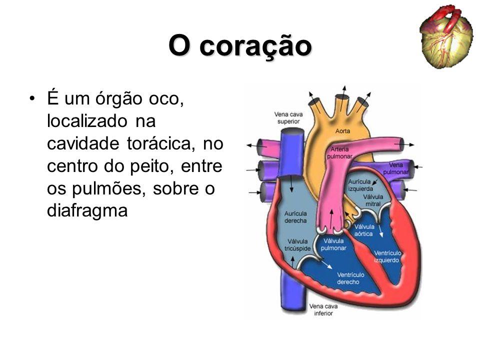 O coração É um órgão oco, localizado na cavidade torácica, no centro do peito, entre os pulmões, sobre o diafragma