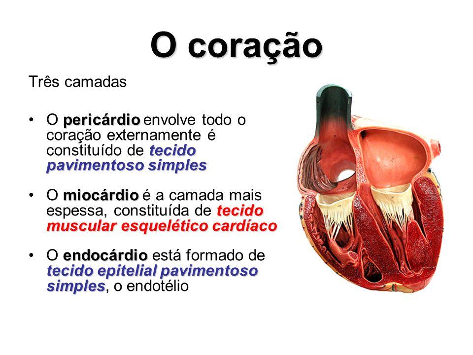 O coração Três camadas pericárdio tecido pavimentoso simplesO pericárdio envolve todo o coração externamente é constituído de tecido pavimentoso simpl
