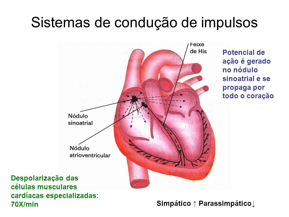 Sistemas de condução de impulsos Despolarização das células musculares cardíacas especializadas: 70X/min Potencial de ação é gerado no nódulo sinoatri