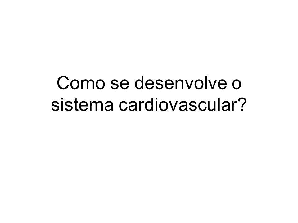Desenvolvimento cardiovascular primitivo 4semana,Inicia na 4 a semana, no mesoderma que reveste o saco vitelino 5 a semanaNa 5 a semana os batimentos cardíacos podem ser detectados