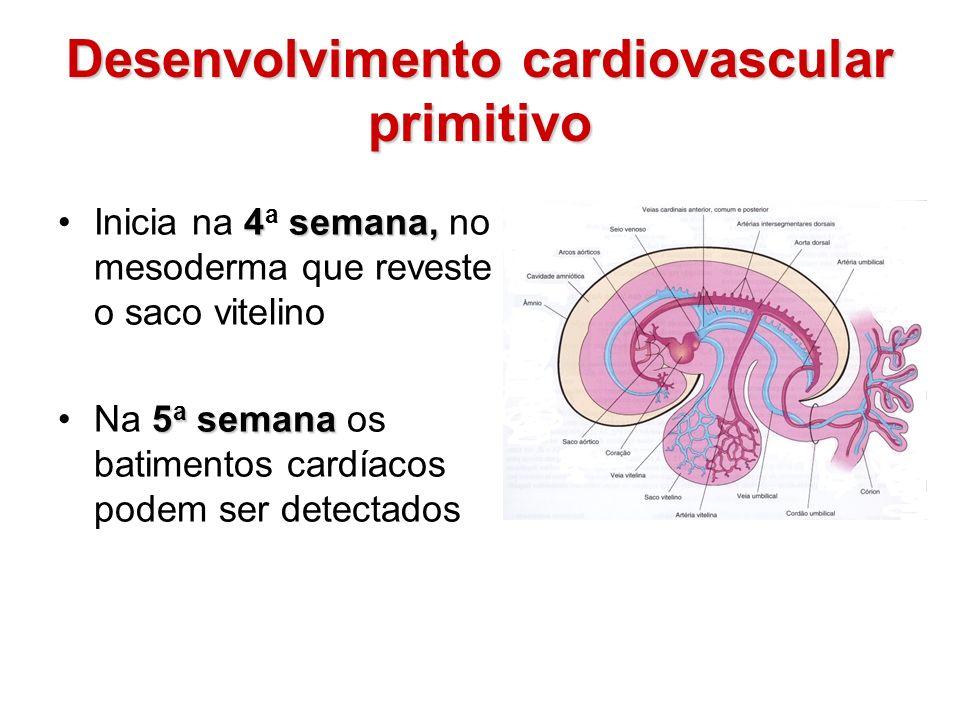 Desenvolvimento cardiovascular primitivo 4semana,Inicia na 4 a semana, no mesoderma que reveste o saco vitelino 5 a semanaNa 5 a semana os batimentos