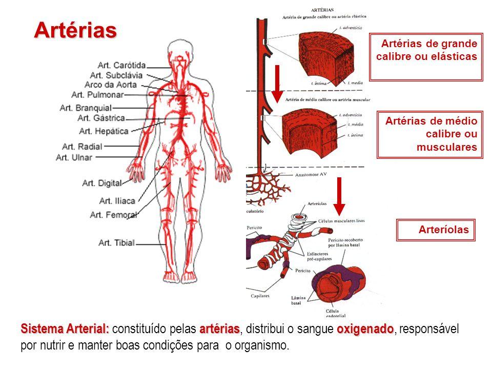 Artérias Artérias de grande calibre ou elásticas Artérias de médio calibre ou musculares Arteríolas Sistema Arterial: artériasoxigenado Sistema Arteri