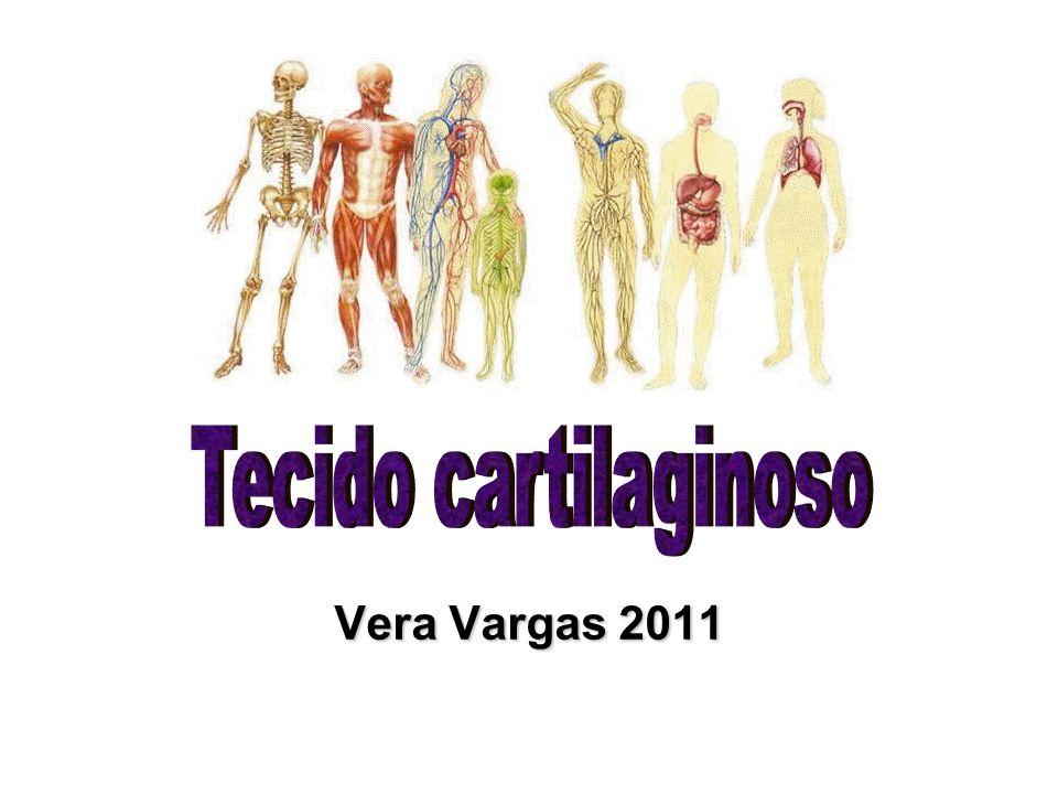Tecido Cartilaginoso Consistência rígida Reveste articulações Absorve choques Participa na formação de ossos longos Pericôndrio –Possui vasos sanguíneos e nervos