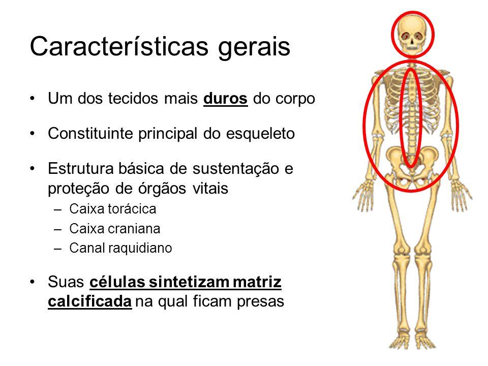Um dos tecidos mais duros do corpo Constituinte principal do esqueleto Estrutura básica de sustentação e proteção de órgãos vitais –Caixa torácica –Ca
