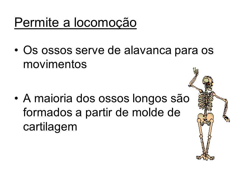 Permite a locomoção Os ossos serve de alavanca para os movimentos A maioria dos ossos longos são formados a partir de molde de cartilagem