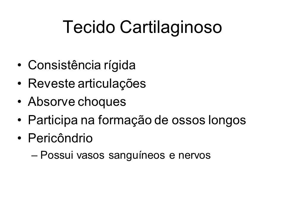 Tecido Cartilaginoso Consistência rígida Reveste articulações Absorve choques Participa na formação de ossos longos Pericôndrio –Possui vasos sanguíne
