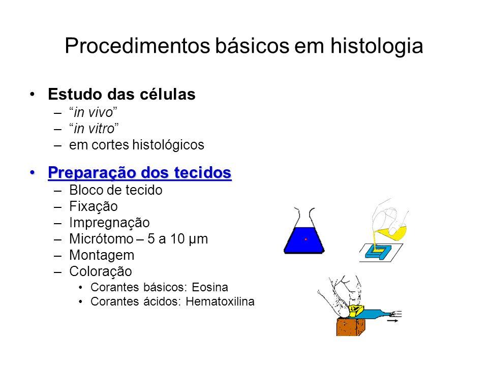 Procedimentos básicos em histologia Estudo das células –in vivo –in vitro –em cortes histológicos Preparação dos tecidosPreparação dos tecidos –Bloco de tecido –Fixação –Impregnação –Micrótomo – 5 a 10 µm –Montagem –Coloração Corantes básicos: Eosina Corantes ácidos: Hematoxilina