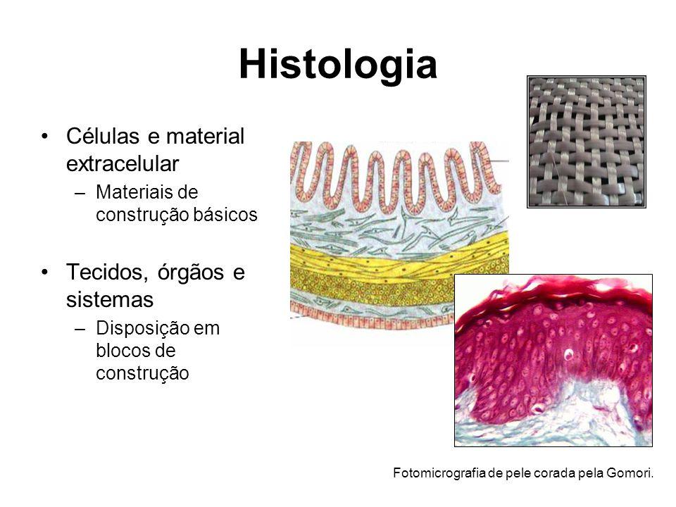 Histologia Células e material extracelular –Materiais de construção básicos Tecidos, órgãos e sistemas –Disposição em blocos de construção Fotomicrografia de pele corada pela Gomori.