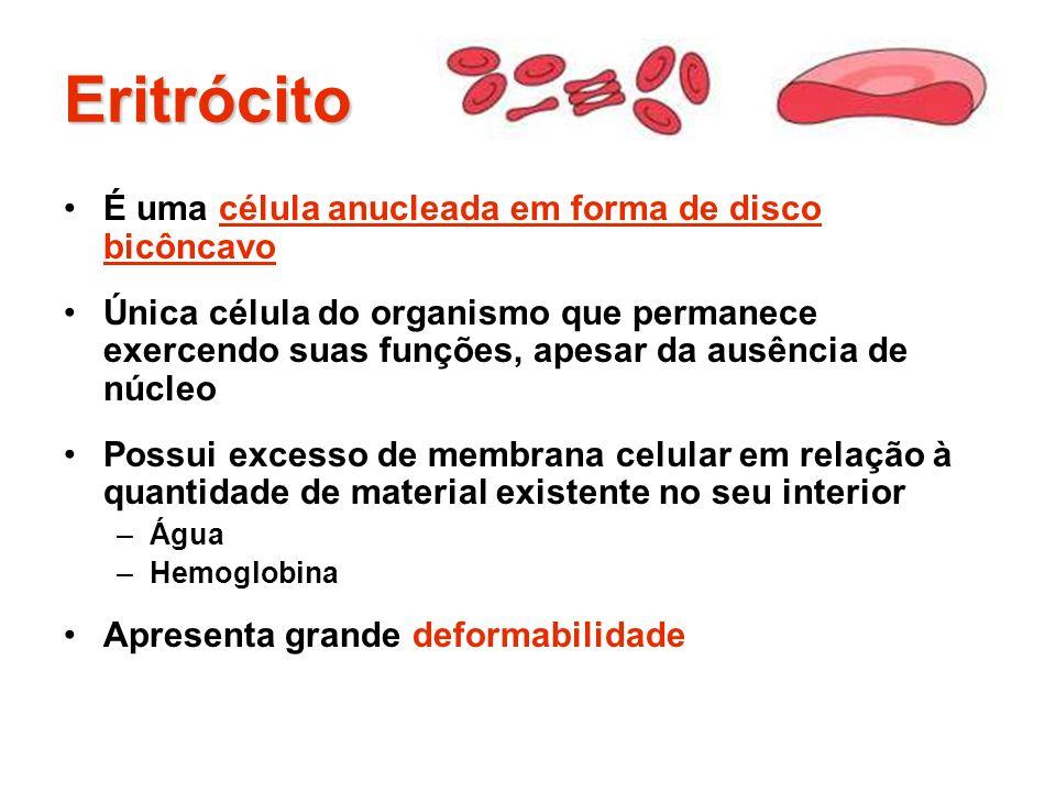 Eritrócito É uma célula anucleada em forma de disco bicôncavo Única célula do organismo que permanece exercendo suas funções, apesar da ausência de nú