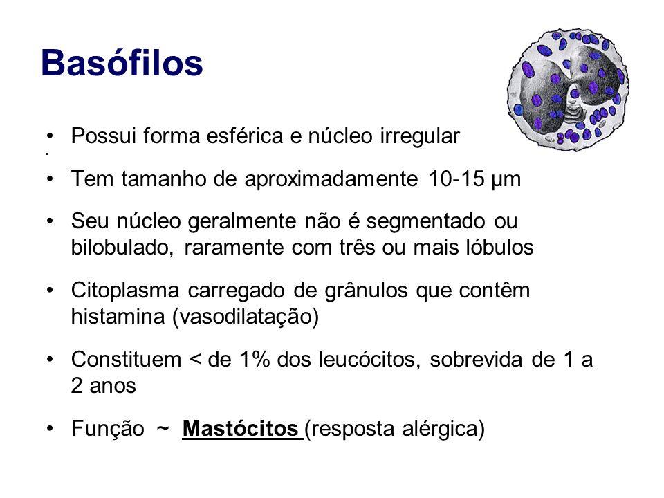 Basófilos Possui forma esférica e núcleo irregular Tem tamanho de aproximadamente 10-15 µm Seu núcleo geralmente não é segmentado ou bilobulado, raram