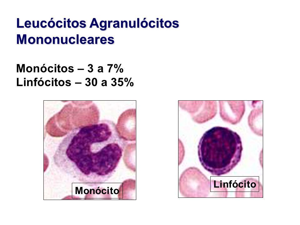 Leucócitos Agranulócitos Mononucleares Monócitos – 3 a 7% Linfócitos – 30 a 35% Monócito Linfócito