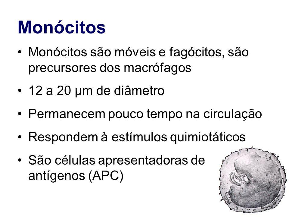 Monócitos Monócitos são móveis e fagócitos, são precursores dos macrófagos 12 a 20 µm de diâmetro Permanecem pouco tempo na circulação Respondem à est
