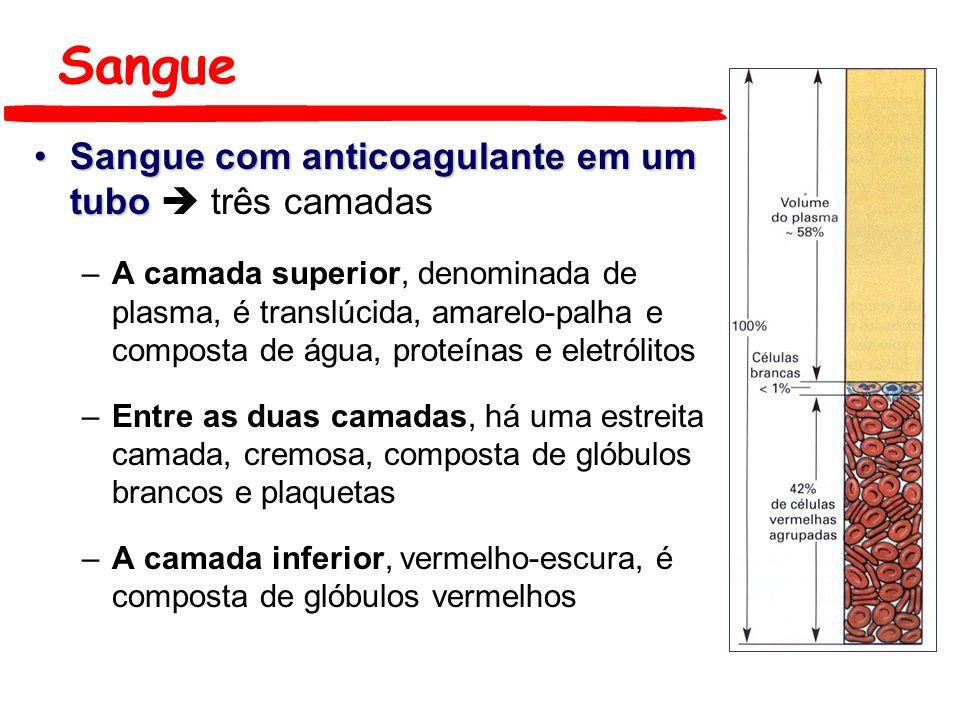 Leucócitos Granulócitos Polimorfonucleares Neutrófilos - 55 a 60% Eosinófilos - 2 a 3% Basófilos - < de 1% Neutrófilo Basófilo Eosinófilo
