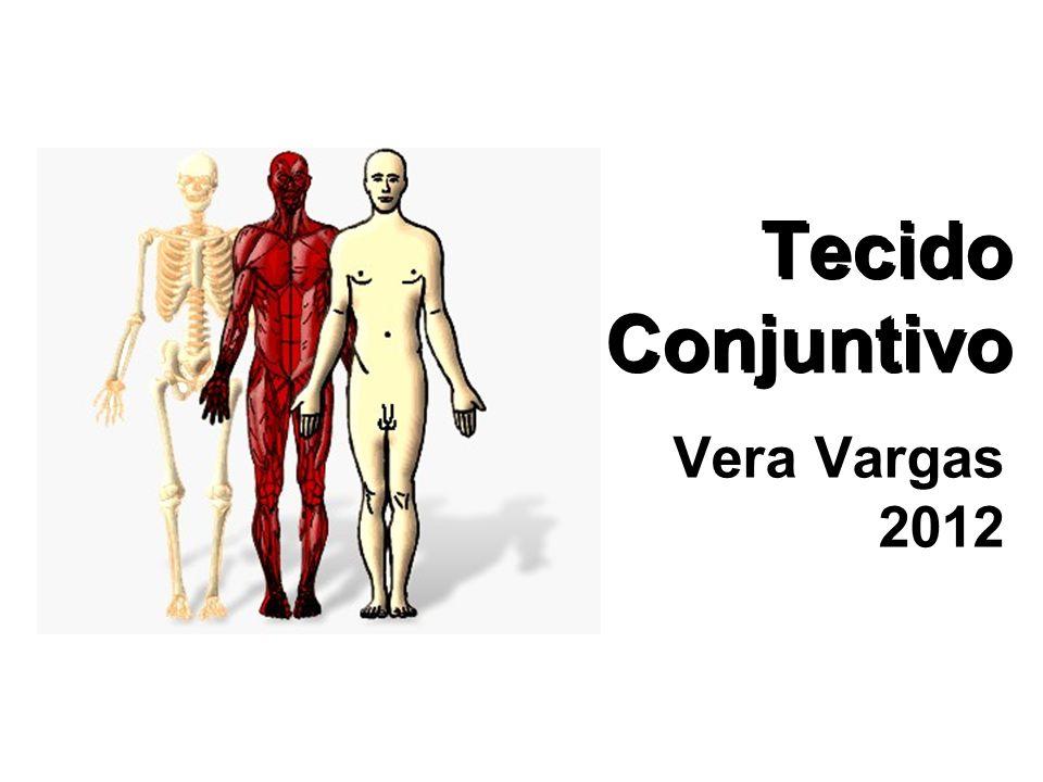 Tecido Conjuntivo Vera Vargas 2012