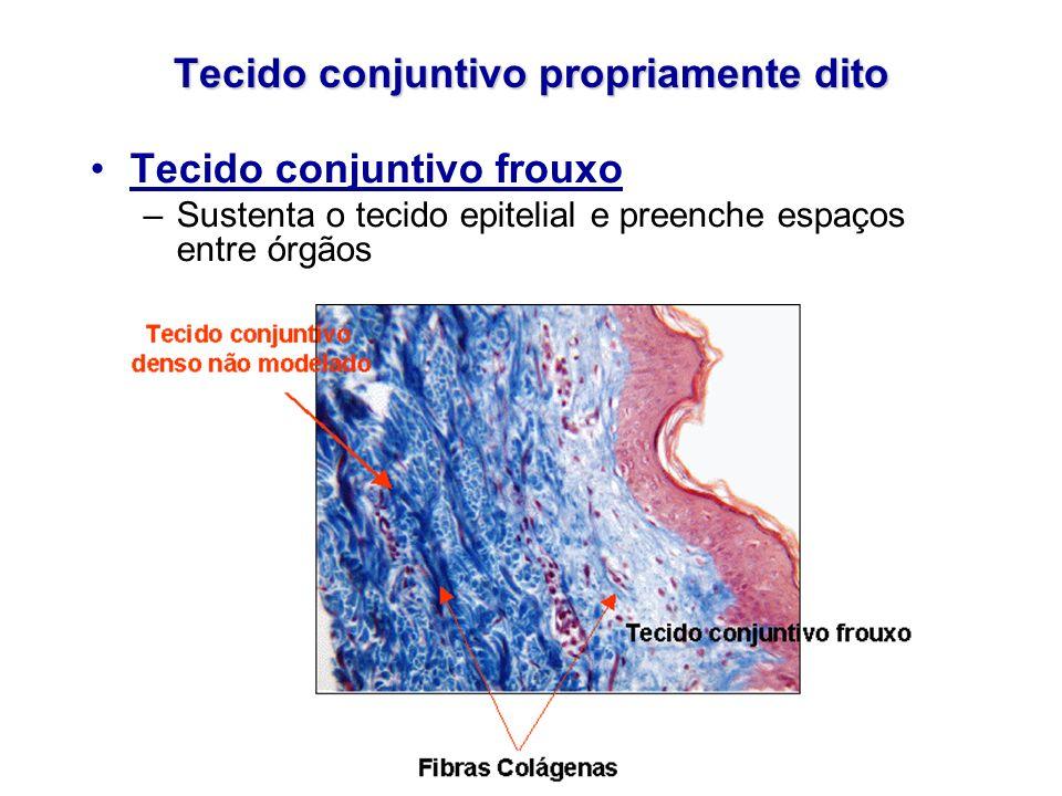 Tecido conjuntivo propriamente dito Tecido conjuntivo frouxo –Sustenta o tecido epitelial e preenche espaços entre órgãos