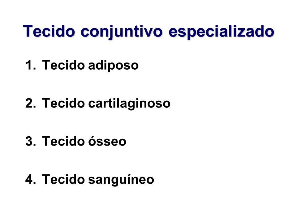 Tecido conjuntivo especializado 1.Tecido adiposo 2.Tecido cartilaginoso 3.Tecido ósseo 4.Tecido sanguíneo