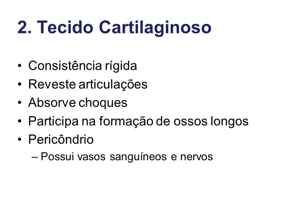 2. Tecido Cartilaginoso Consistência rígida Reveste articulações Absorve choques Participa na formação de ossos longos Pericôndrio –Possui vasos sangu