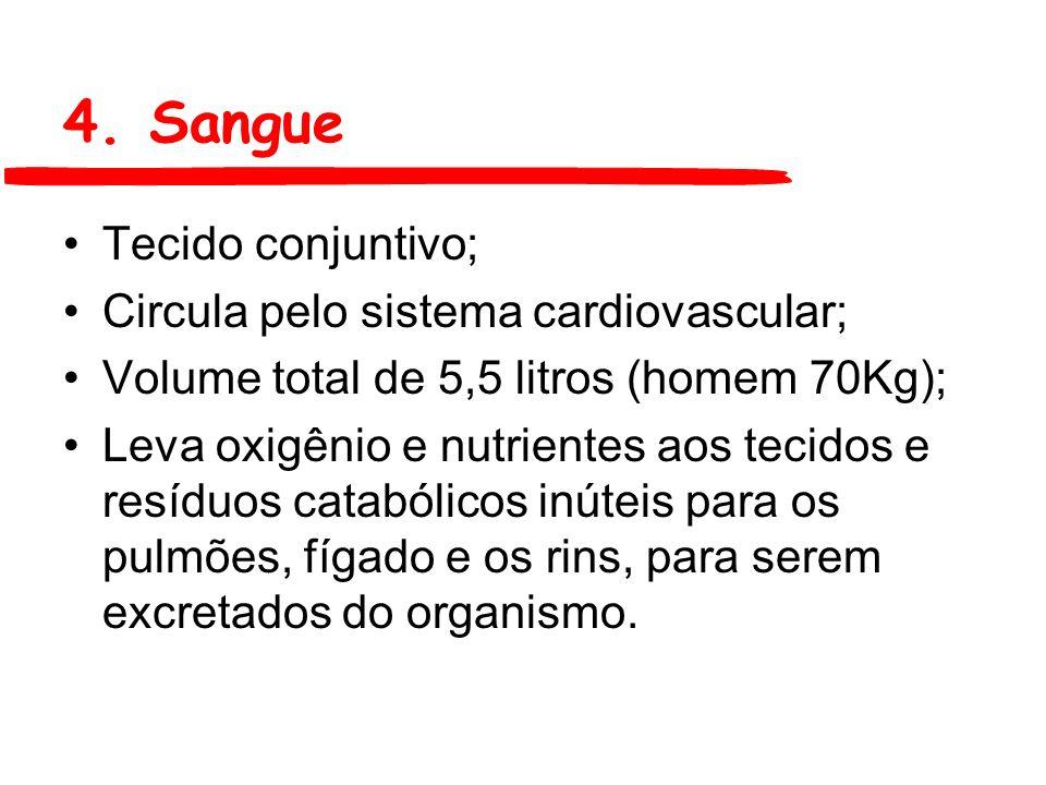 4. Sangue Tecido conjuntivo; Circula pelo sistema cardiovascular; Volume total de 5,5 litros (homem 70Kg); Leva oxigênio e nutrientes aos tecidos e re