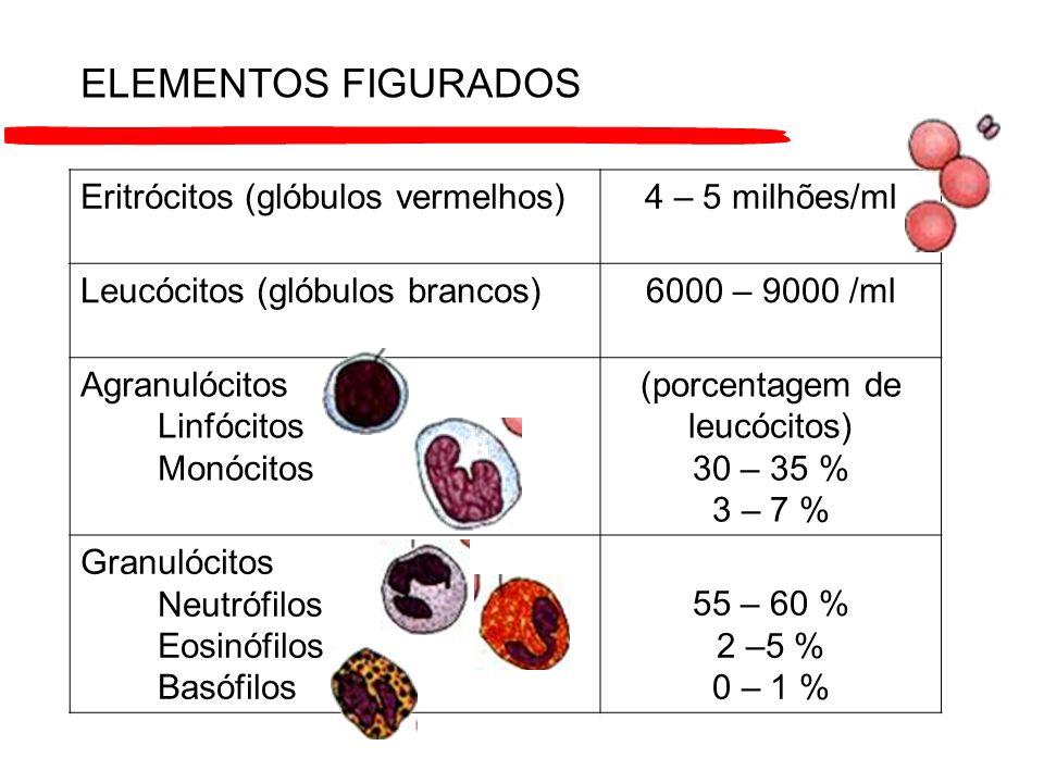 Eritrócitos (glóbulos vermelhos)4 – 5 milhões/ml Leucócitos (glóbulos brancos)6000 – 9000 /ml Agranulócitos Linfócitos Monócitos (porcentagem de leucó