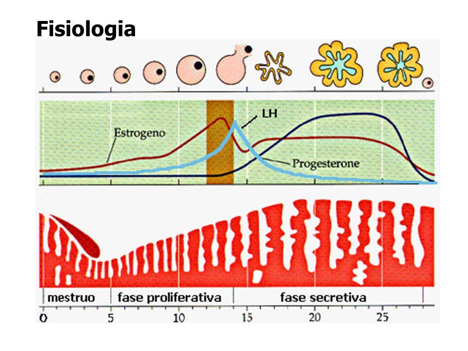 1 a semana A zona pelúcida desaparece e o blastocisto aumenta de tamanho e prende-se ao endométrio pelo pólo embrionário cerca de seis dias após a fertilização.