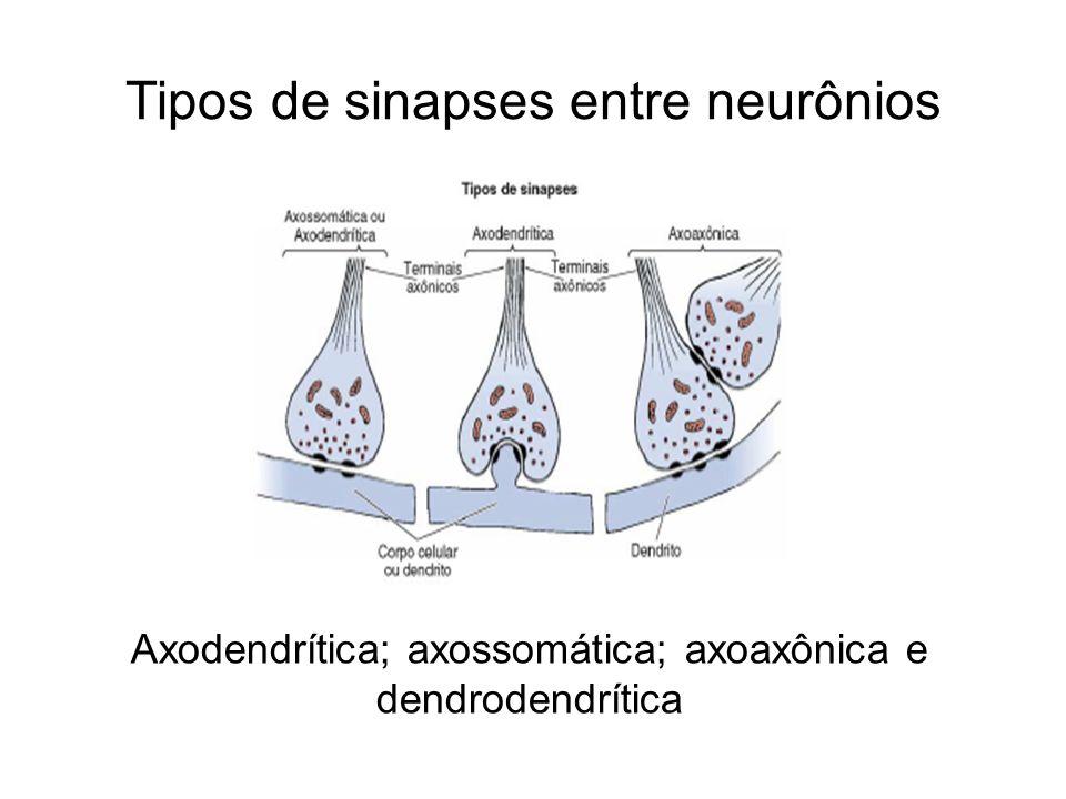 Tipos de sinapses entre neurônios Axodendrítica; axossomática; axoaxônica e dendrodendrítica