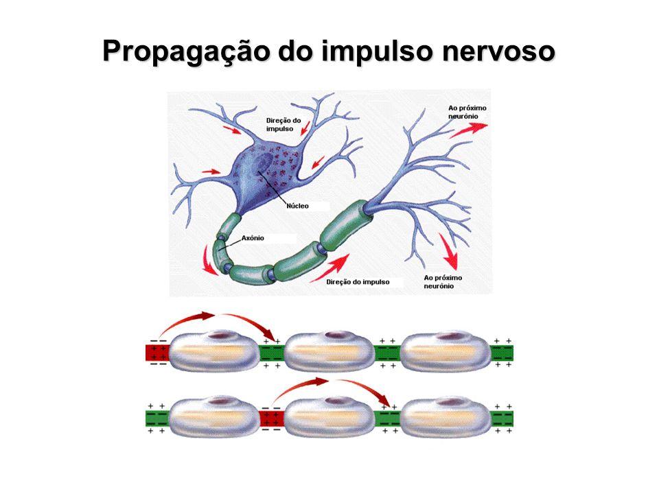 Propagação do impulso nervoso