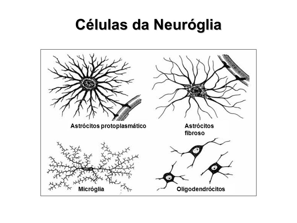 Células da Neuróglia Astrócitos protoplasmático Astrócitos fibroso MicrógliaOligodendrócitos