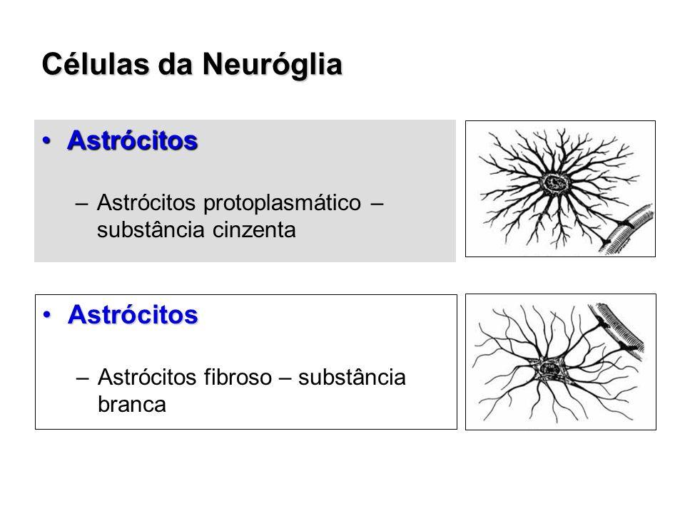 Células da Neuróglia AstrócitosAstrócitos –Astrócitos protoplasmático – substância cinzenta AstrócitosAstrócitos –Astrócitos fibroso – substância branca