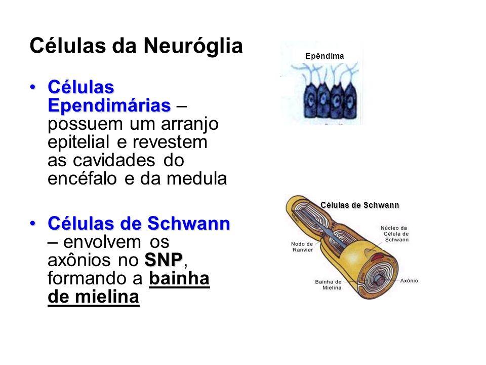 Células da Neuróglia Células EpendimáriasCélulas Ependimárias – possuem um arranjo epitelial e revestem as cavidades do encéfalo e da medula Células de Schwann SNPCélulas de Schwann – envolvem os axônios no SNP, formando a bainha de mielina Epêndima Células de Schwann