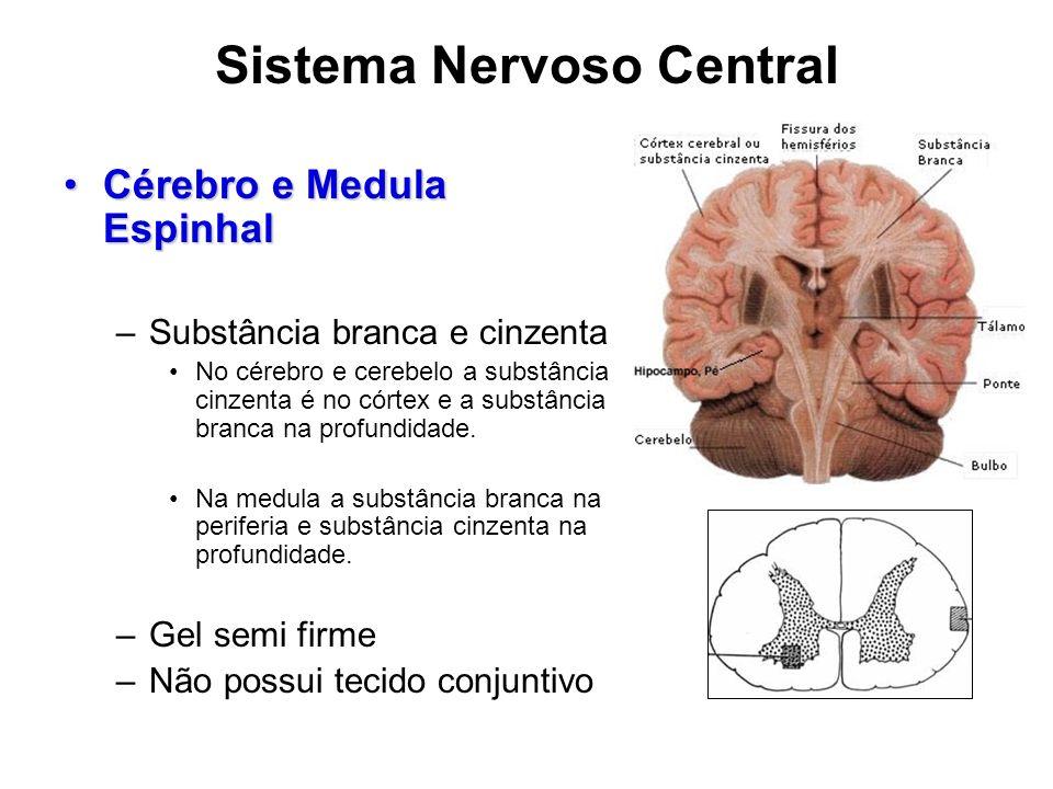 Sistema Nervoso Central Cérebro e Medula EspinhalCérebro e Medula Espinhal –Substância branca e cinzenta No cérebro e cerebelo a substância cinzenta é no córtex e a substância branca na profundidade.