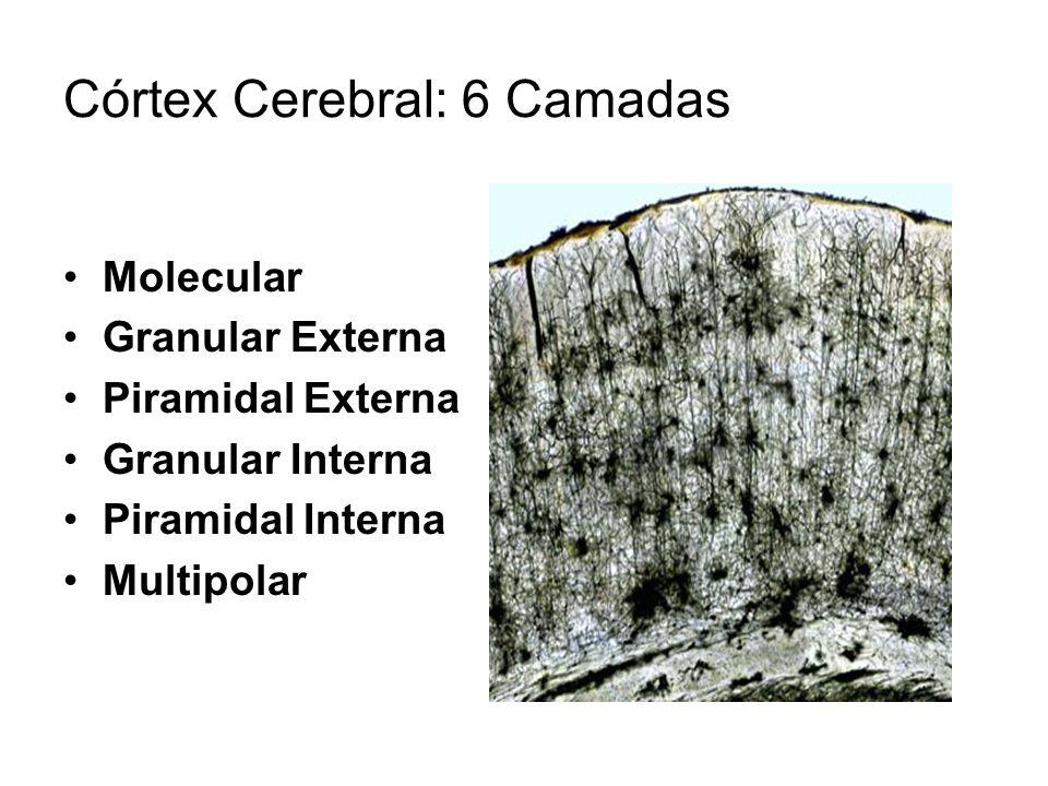 Córtex Cerebral: 6 Camadas Molecular Granular Externa Piramidal Externa Granular Interna Piramidal Interna Multipolar