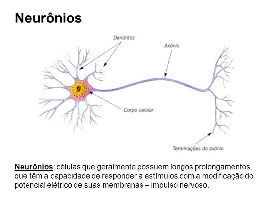 Neurônios Neurônios: células que geralmente possuem longos prolongamentos, que têm a capacidade de responder a estímulos com a modificação do potencial elétrico de suas membranas – impulso nervoso.