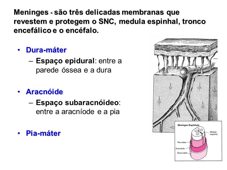 Meninges - são três delicadas membranas que revestem e protegem o SNC, medula espinhal, tronco encefálico e o encéfalo. Dura-máterDura-máter –Espaço e