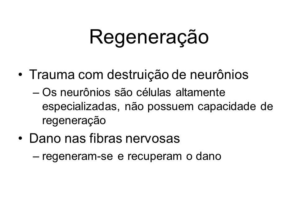 Regeneração Trauma com destruição de neurônios –Os neurônios são células altamente especializadas, não possuem capacidade de regeneração Dano nas fibras nervosas –regeneram-se e recuperam o dano