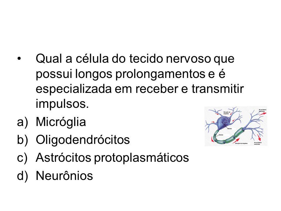 Qual a célula do tecido nervoso que possui longos prolongamentos e é especializada em receber e transmitir impulsos. a)Micróglia b)Oligodendrócitos c)