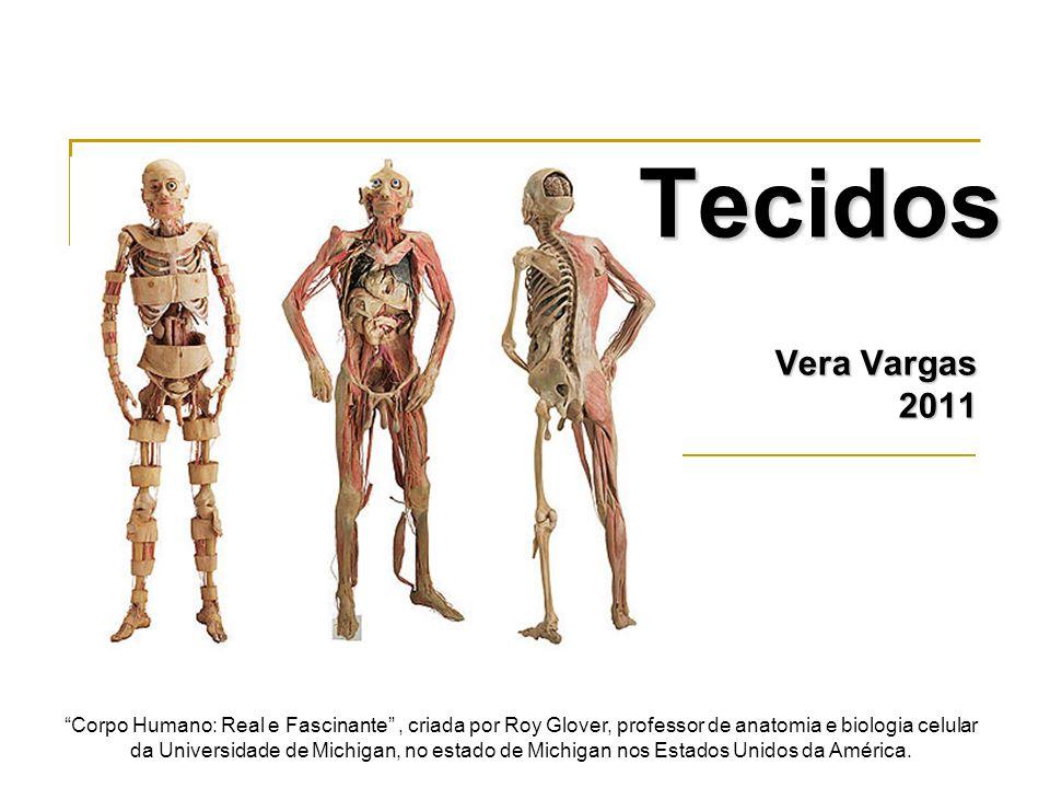 Ductos com tecido epitelial cúbico simples Estroma de tecido conjuntivo denso não modelado Fonte: www.google.com.br/figuras e Vera Vargas