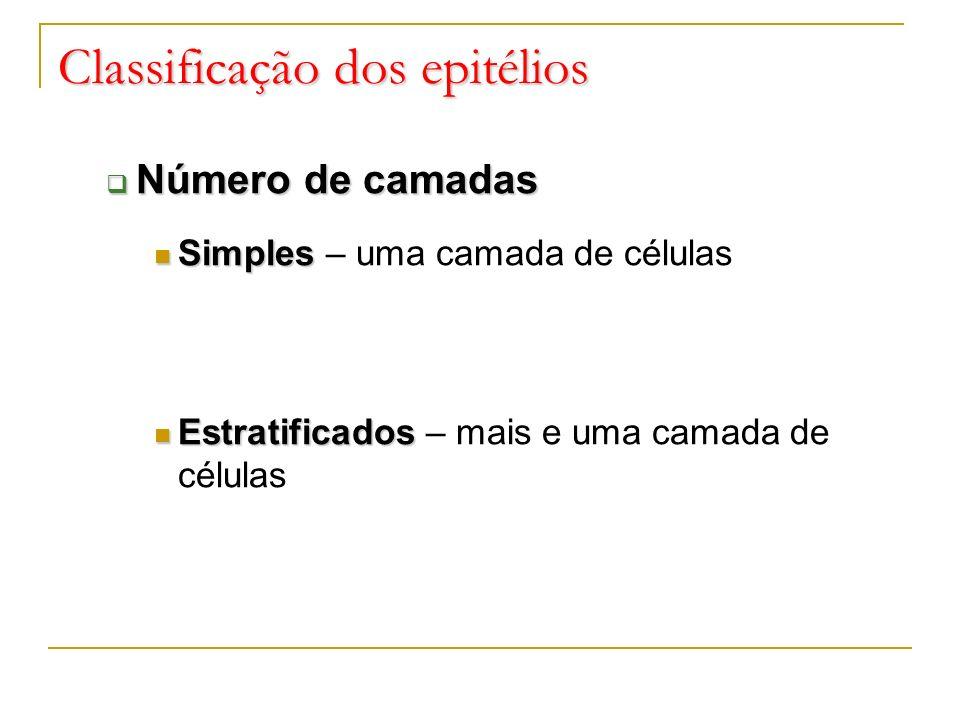 Classificação dos epitélios Número de camadas Número de camadas Simples Simples – uma camada de células Estratificados Estratificados – mais e uma cam
