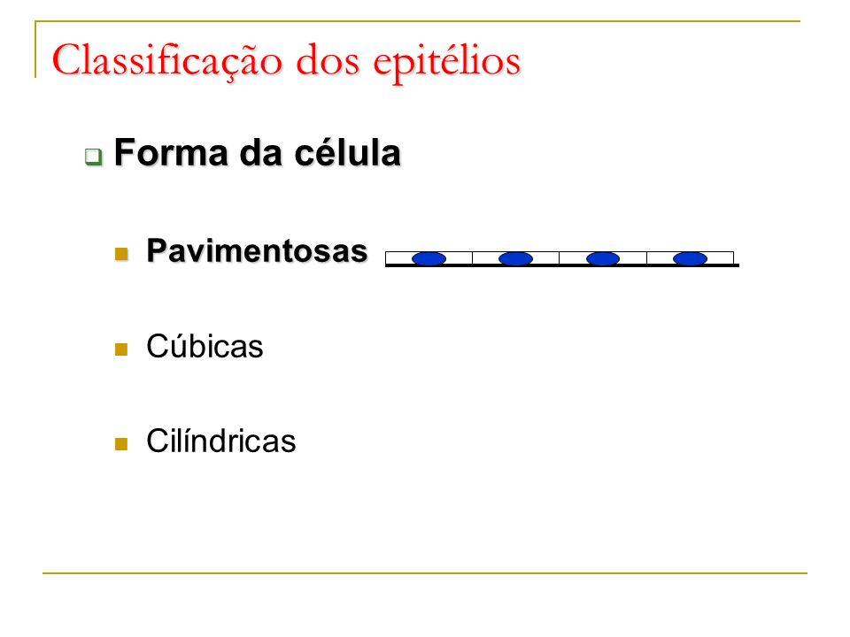 Classificação dos epitélios Forma da célula Forma da célula Pavimentosas Pavimentosas Cúbicas Cilíndricas