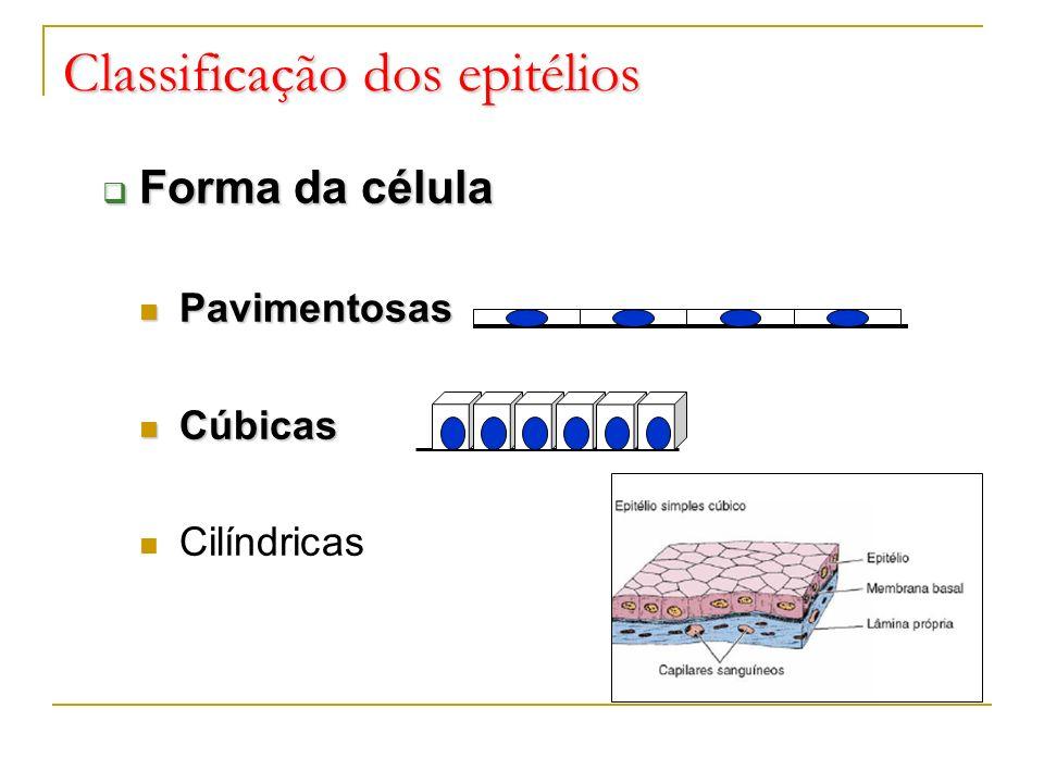 Classificação dos epitélios Forma da célula Forma da célula Pavimentosas Pavimentosas Cúbicas Cúbicas Cilíndricas