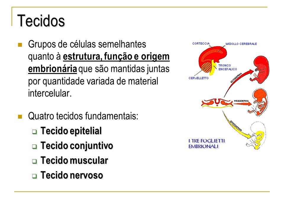 Tecidos Grupos de células semelhantes quanto à estrutura, função e origem embrionária que são mantidas juntas por quantidade variada de material inter