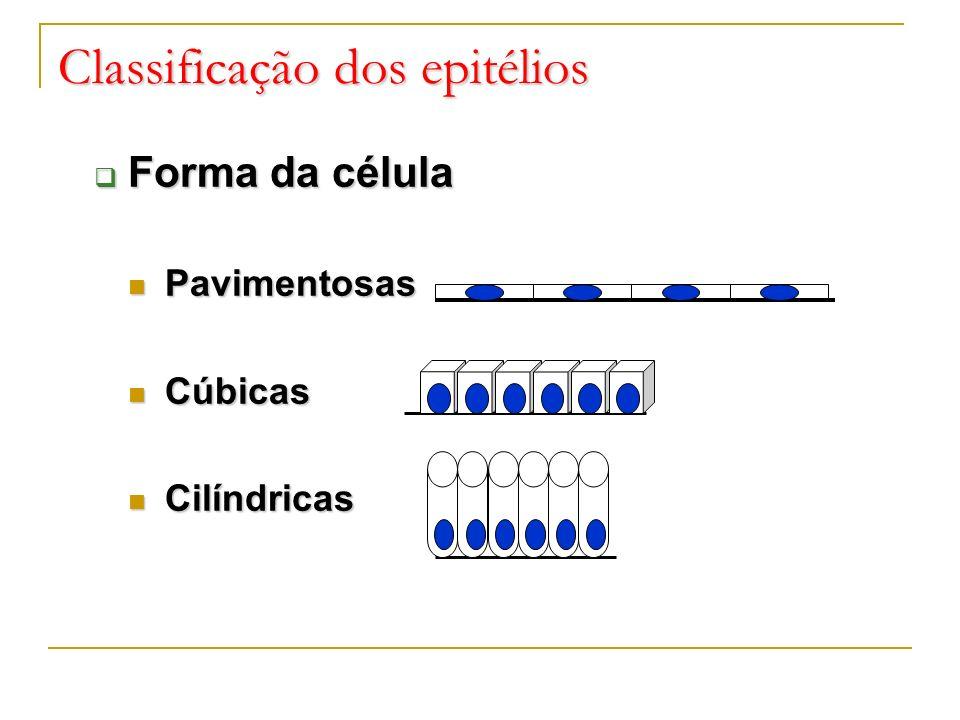 Classificação dos epitélios Forma da célula Forma da célula Pavimentosas Pavimentosas Cúbicas Cúbicas Cilíndricas Cilíndricas