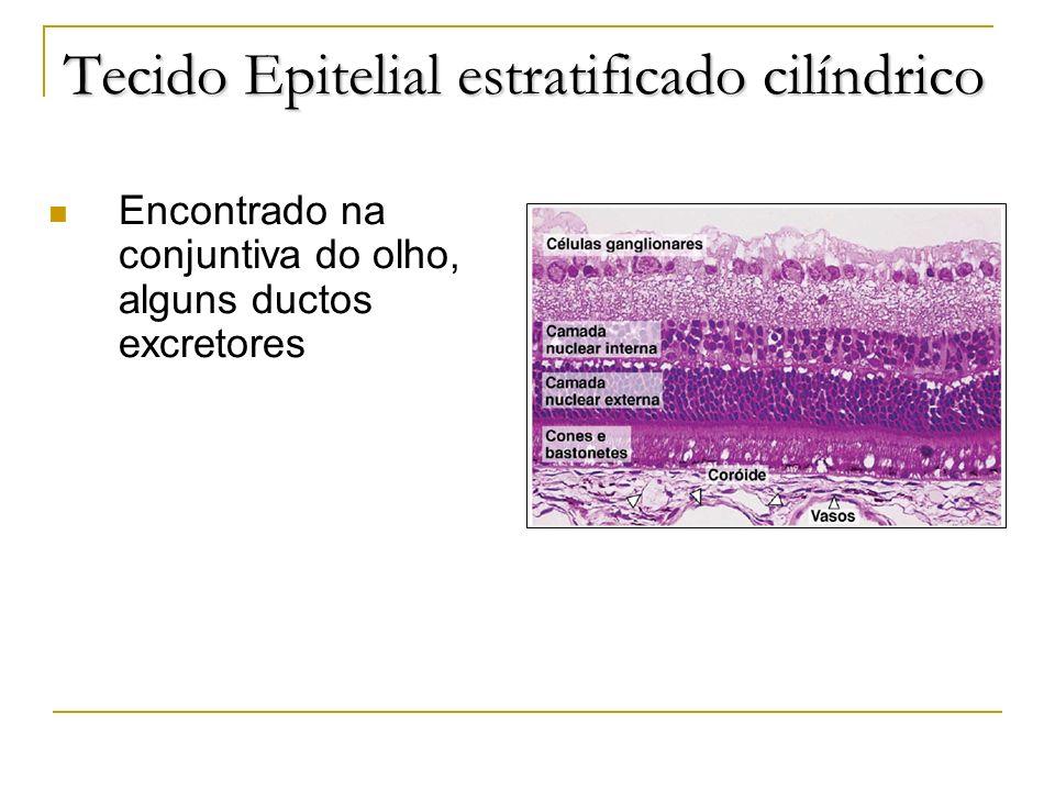 Tecido Epitelial estratificado cilíndrico Encontrado na conjuntiva do olho, alguns ductos excretores