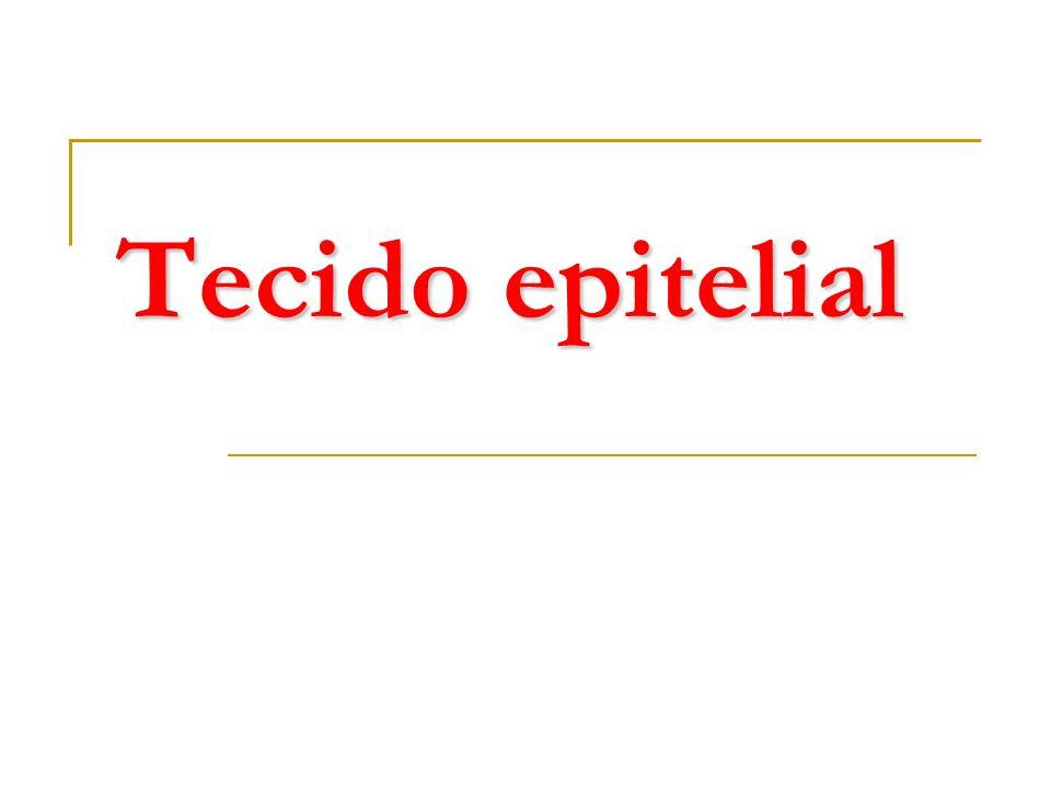 Glândula Adrenal ou supra-renal