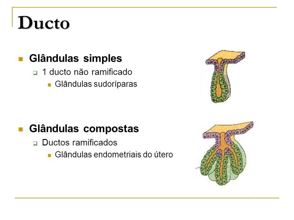 Ducto Glândulas simples 1 ducto não ramificado Glândulas sudoríparas Glândulas compostas Ductos ramificados Glândulas endometriais do útero