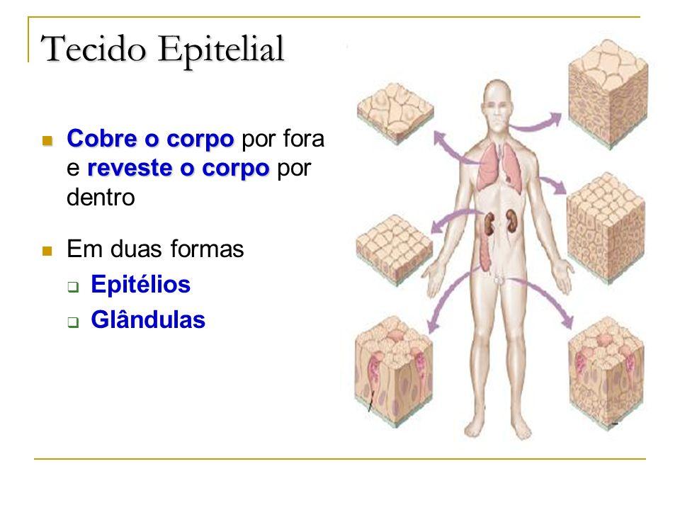 Tecido Epitelial Cobre o corpo reveste o corpo Cobre o corpo por fora e reveste o corpo por dentro Em duas formas Epitélios Glândulas