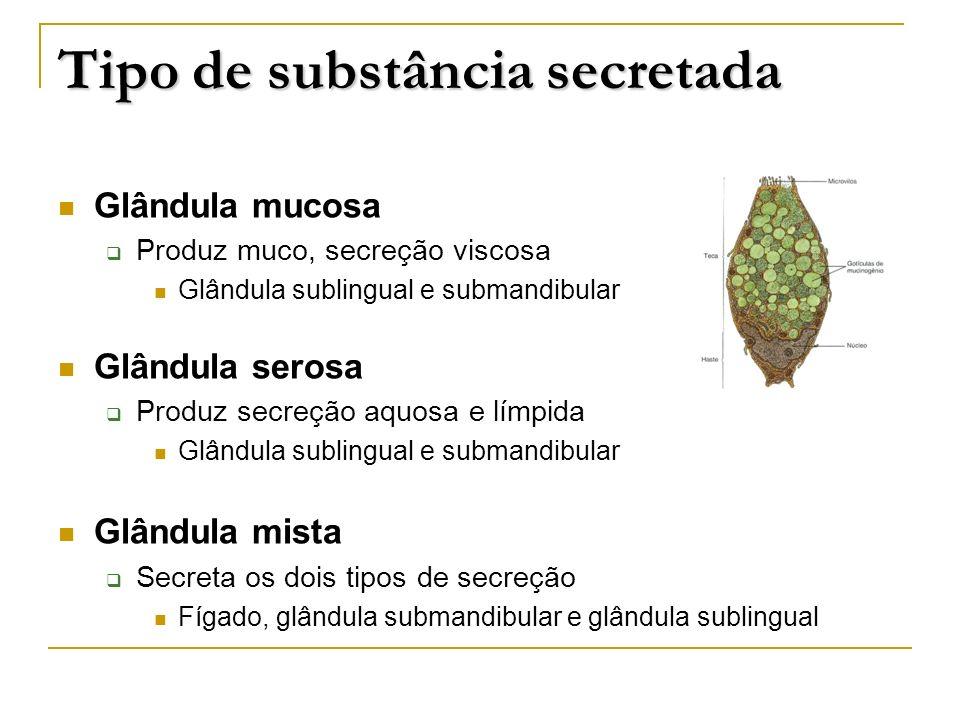 Tipo de substância secretada Glândula mucosa Produz muco, secreção viscosa Glândula sublingual e submandibular Glândula serosa Produz secreção aquosa