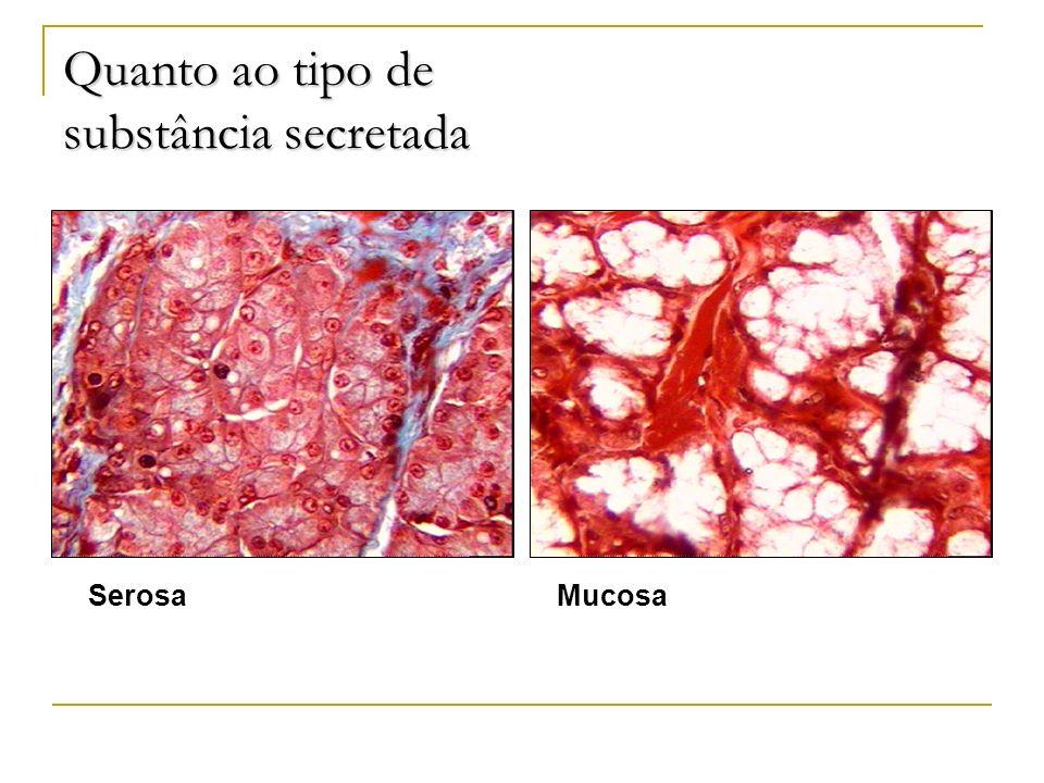Quanto ao tipo de substância secretada SerosaMucosa